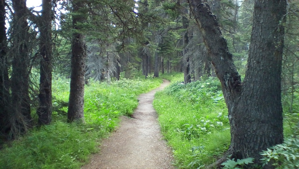 Aster Park Trail 4